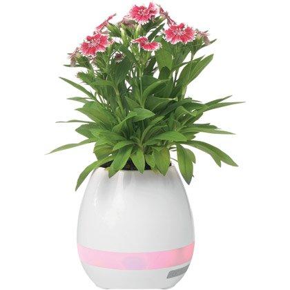 Høyttaler Vase, 5W